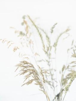 Le belle erbe selvatiche gradiscono l'erba del frutteto, il brome sterile e il ryegrass isolati su una priorità bassa bianca con lo spazio della copia