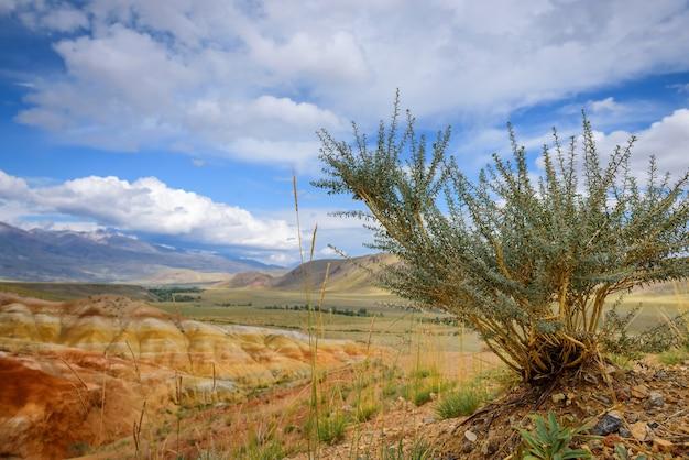 Bellissimo paesaggio selvaggio sulla soleggiata giornata estiva. in primo piano una pianta sullo sfondo di montagne sconfinate e cielo azzurro con nuvole bianche.