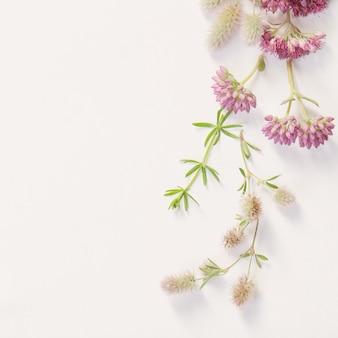 Bellissimi fiori di campo su carta bianca sullo sfondo