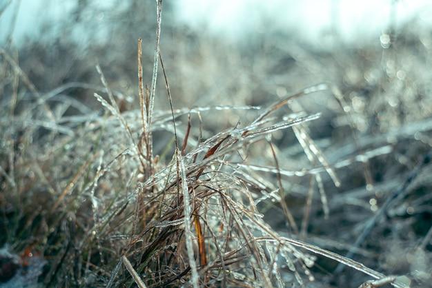 Bellissimo bacground invernale di erba selvatica ricoperta di ghiaccio