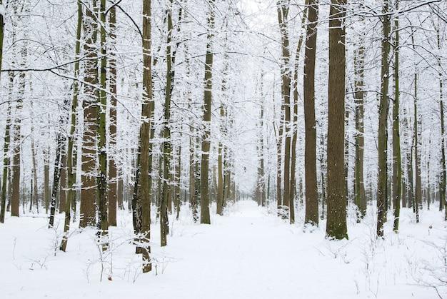 Bella foresta invernale e la strada