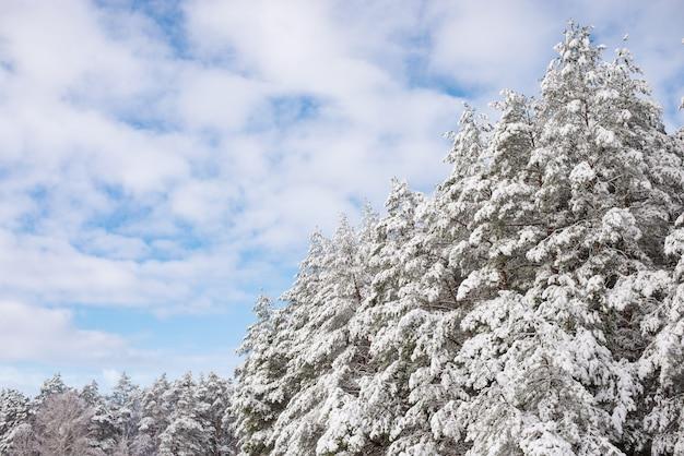 Bella foresta invernale in uno spesso strato di neve soffice
