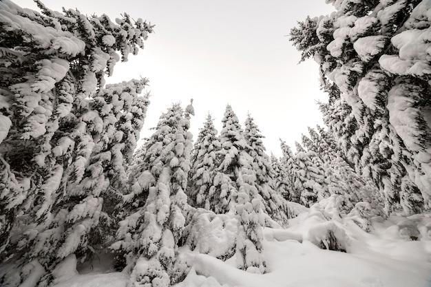 Bellissimo paesaggio invernale. fitta foresta di montagna con alti abeti verdi scuri ricoperti di neve profonda pulita in una gelida giornata invernale.