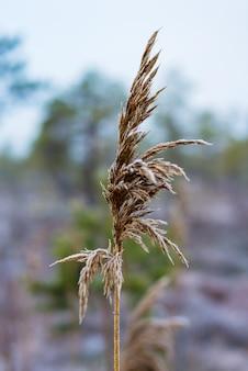 Bellissimo paesaggio invernale, erba ghiacciata, sfondo Foto Premium