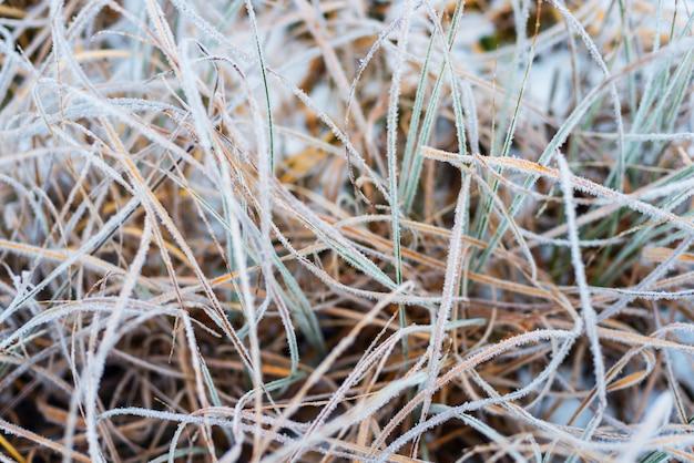 Bellissimo paesaggio invernale, erba ghiacciata, sfondo