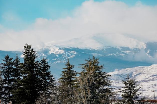 Bellissimo paesaggio invernale incandescente dalla luce del sole al mattino coperto di neve cielo drammatico