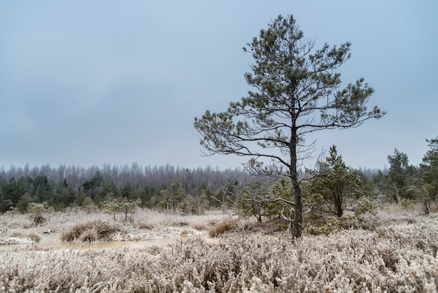 Bellissimo paesaggio invernale, brina su una palude