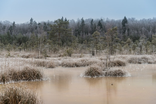 Splendido paesaggio invernale, brina su una palude