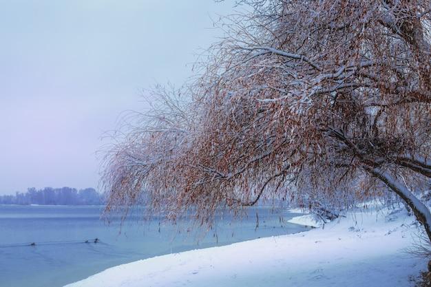 Bella scena di paesaggio invernale con alberi congelati
