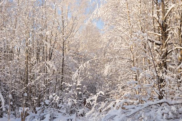 Bellissimo paesaggio invernale nel parco innevato.