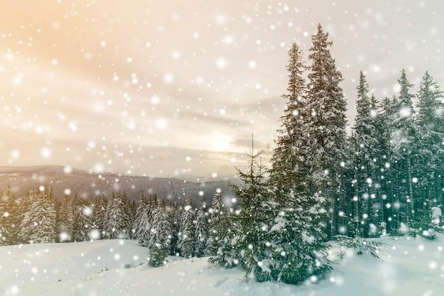 Bellissimo paesaggio di montagna invernale. alti abeti verde scuro coperti di neve sulle cime delle montagne e sullo sfondo del cielo nuvoloso.