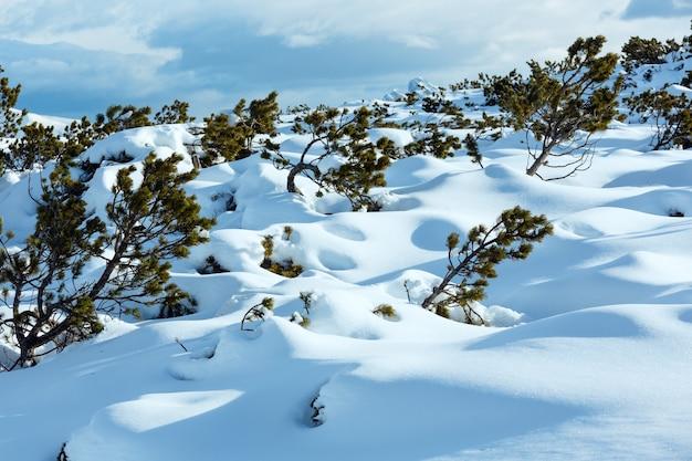 Bellissimo paesaggio di montagna invernale con alberi di pino in cumulo di neve.