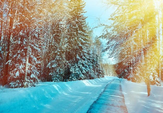 Bellissimo paesaggio rurale invernale con sole e neve della foresta.