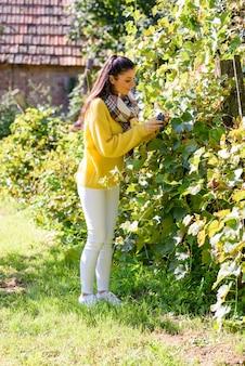Una bella donna che mangia uva da vino su un campo