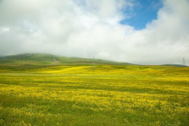 Bellissimo fiore giallo con campo in erba