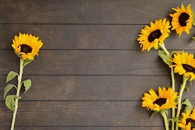 Bei girasoli gialli su fondo di legno con lo spazio della copia