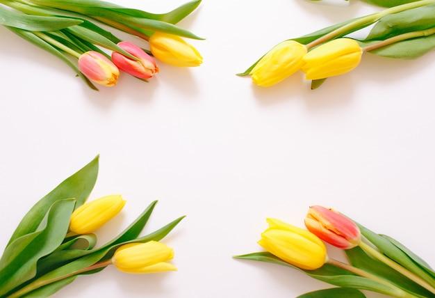 Bei tulipani gialli su sfondo bianco, posto per la vista dall'alto del testo.