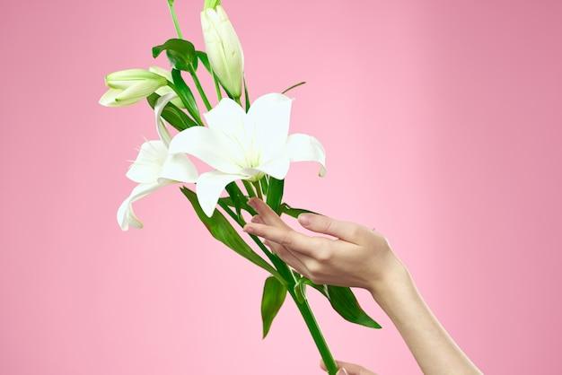 Bella mano della giovane donna con la posa bianca del fiore del giglio