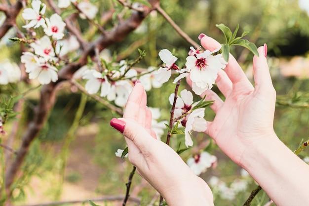 La bella giovane donna passa i fiori della mandorla nell'albero con fondo verde delle foglie e dei rami in primavera
