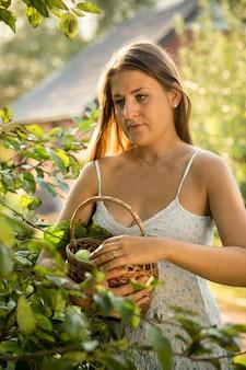 Bella giovane donna che raccoglie mele in giardino al giorno di sole
