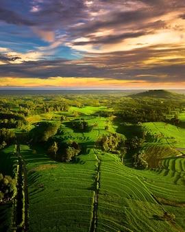 Bellezza veduta aerea risaie verdi nella campagna dell'indonesia