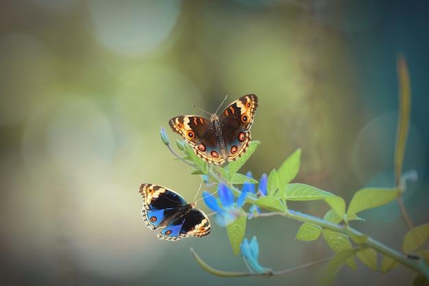 Farfalla di bellezza sui fiori con lo sfondo della natura