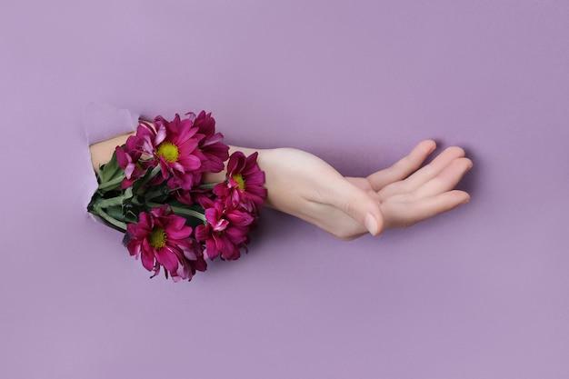Mano di bellezza con fiori in un buco in uno sfondo di carta viola. nature hand cosmetics, estratto naturale di fiori