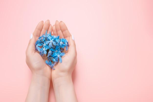 Le mani di bellezza di una donna con i fiori blu si trovano sulla tavola, fondo rosa. prodotti cosmetici naturali e cura delle mani, idratazione e riduzione delle rughe, cura della pelle
