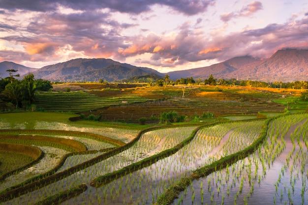 La bellezza delle terrazze di riso kemumu con l'atmosfera delle nuvole al tramonto sul monte bengkulu utara, indonesia