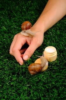 Bellezza, cosmetici per il corpo idratanti con mucina di lumaca, cura della pelle, crema per le mani su erba verde.