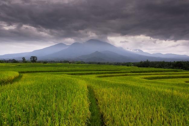 La bellezza del mattino nelle risaie con nuvole nere sulla montagna