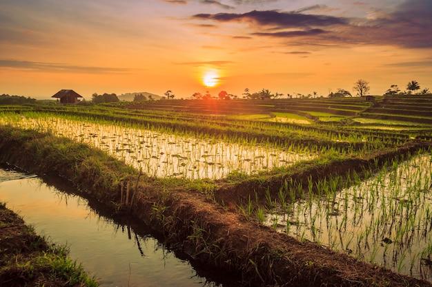La bellezza del riflesso del cielo al tramonto sull'acqua a terrazze di riso con riso verde a bengkulu, in indonesia Foto Premium
