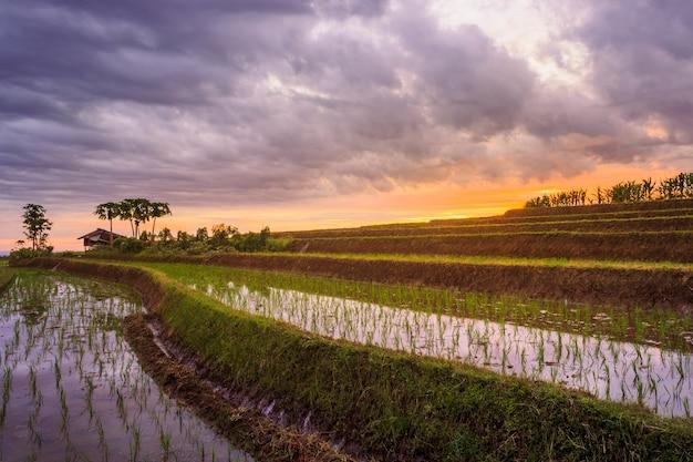 La bellezza delle formazioni terrazzate di riso nel nord di bengkulu, in indonesia, i bellissimi colori e la luce naturale del cielo
