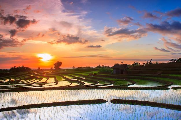 Tramonto di bellezza alla terrazza indonesia delle risaie