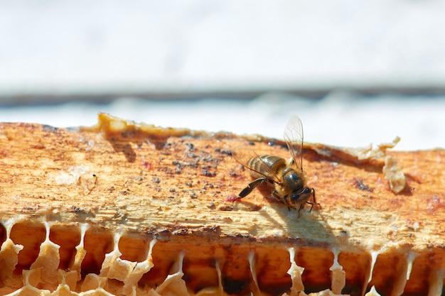 Un'ape in un primo piano dell'apiario su un favo