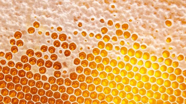 Miele fresco d'api in favi. sfondo e texture. cibo naturale vitaminico. prodotto del lavoro delle api
