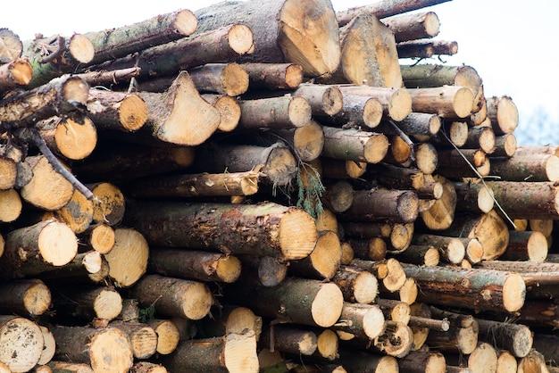 Tronchi di faggio, parco nazionale, legname forestale. materiale in legno