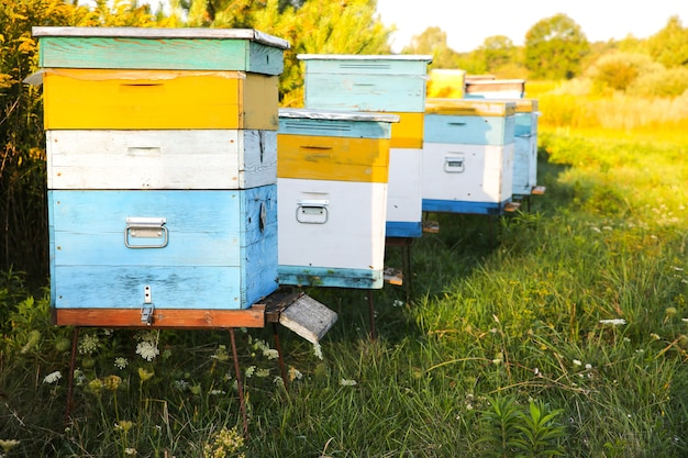 Alveare all'aperto. produzione di miele naturale. cibo ecologico.