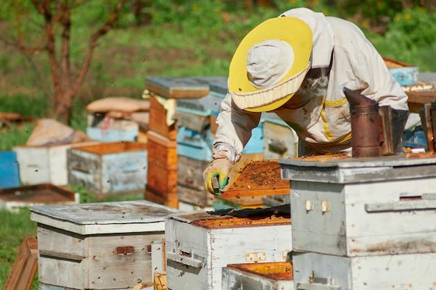 Un apicoltore in un apiario controlla gli alveari con le api