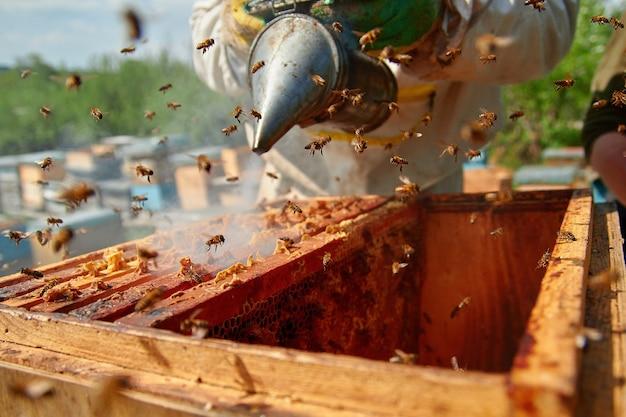 Un apicoltore controlla gli alveari e disperde le api con il fumo