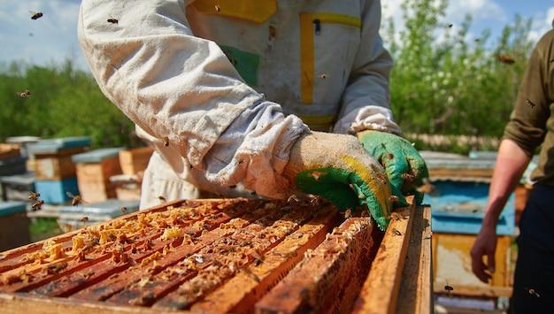 Un apicoltore controlla gli alveari