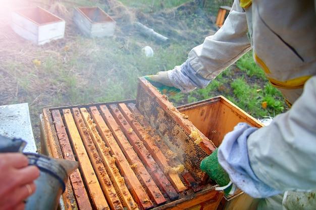 Un apicoltore allontana le api dall'alveare con il fumo