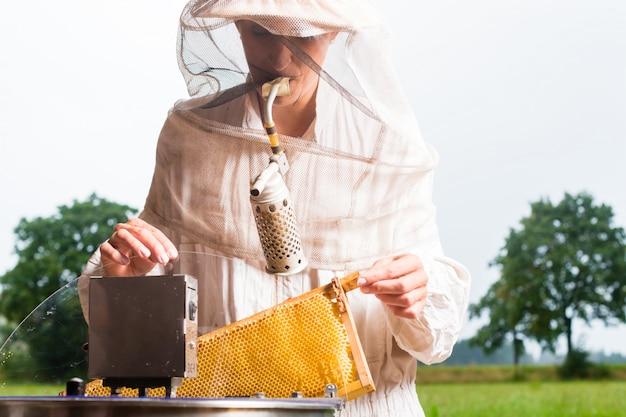 Apicoltore che riempie l'estrattore del miele