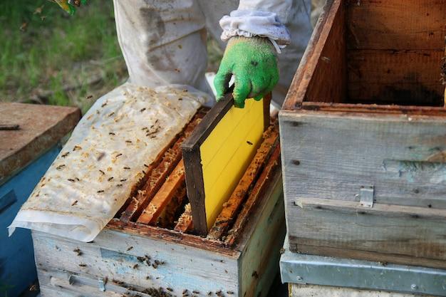 Apicoltore in guanti e costume da apicoltore controlla gli alveari con le api, si prepara alla raccolta del miele, cura i telai con i favi