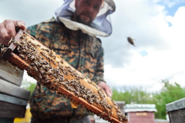 Apicoltore che tiene il telaio del favo con le api.