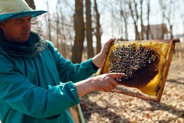 L'apicoltore tiene il telaio con il favo di alveare
