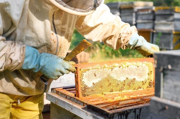 L'apicoltore sta lavorando con api e alveari nell'apiario.