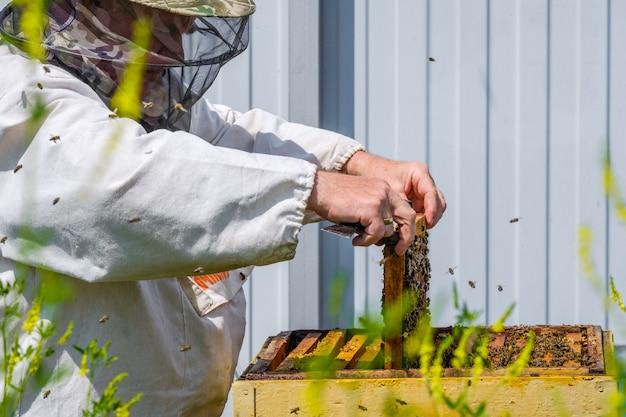 Un apicoltore in abiti protettivi tiene un telaio con favi, ispeziona le api nell'apiario. sui vestiti c'è un'iscrizione in russo: un augurio per una raccolta di miele di successo