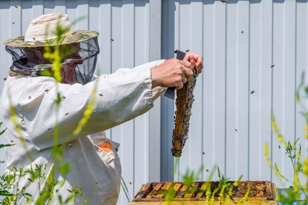 Un apicoltore in abiti protettivi tiene un telaio con favi