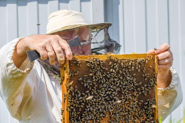 Un apicoltore in abbigliamento protettivo tiene un telaio con favi